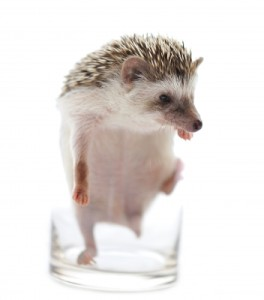 """Hedgehog in a Glass"" Courtesy of Sommai / FreeDigitalPhotos.net"